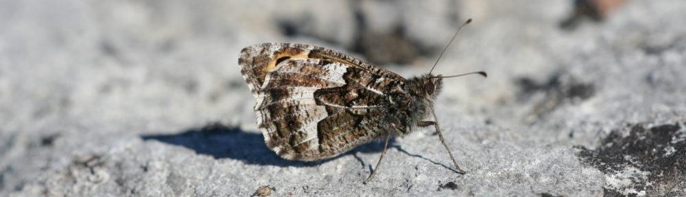 Entomologiska Sällskapet i Lund